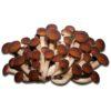 Micelio Pioppini Secco 100g per coltivazione Funghi (Pholiota Aegerita)