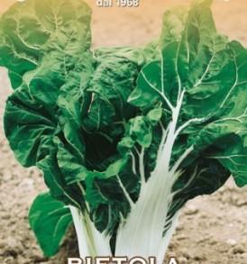 Semi di Bietola da coste Foglia liscia verde Invernale Barese LA ROSA 500 g sementi