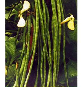 Semi Fagiolo Nano Dolico LA SEMIORTO 250 g sementi