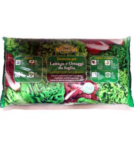 terriccio biologico lattuga vigor plant