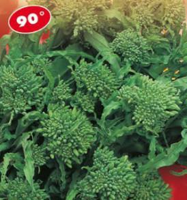Semi Orto Cima di rapa riccia S.Marzano di marzo 90° LA ROSA 500 g